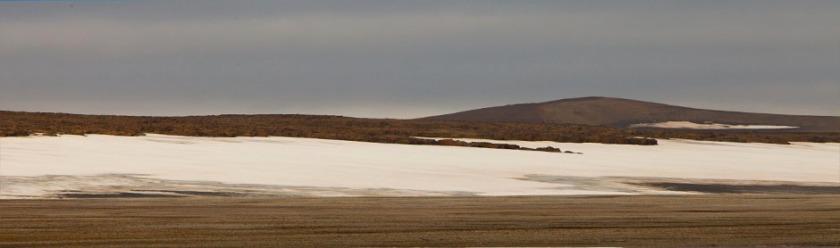 walrus beach